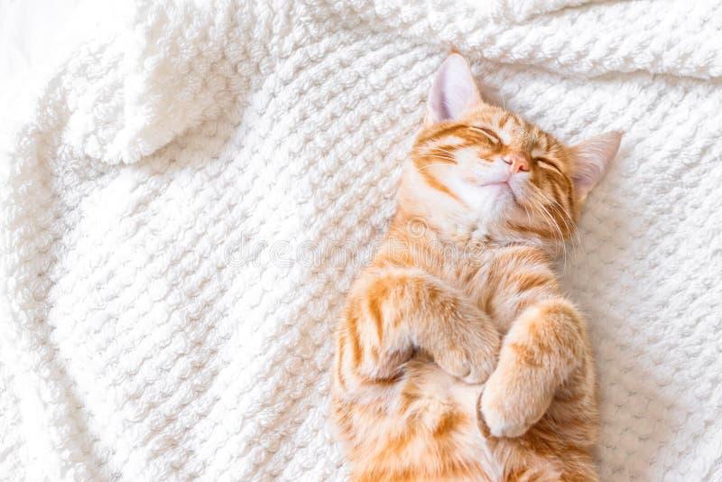 Ginger cat sleeping stock image