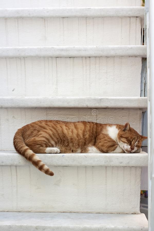 Ginger cat sleeping on stairs royalty free stock photo