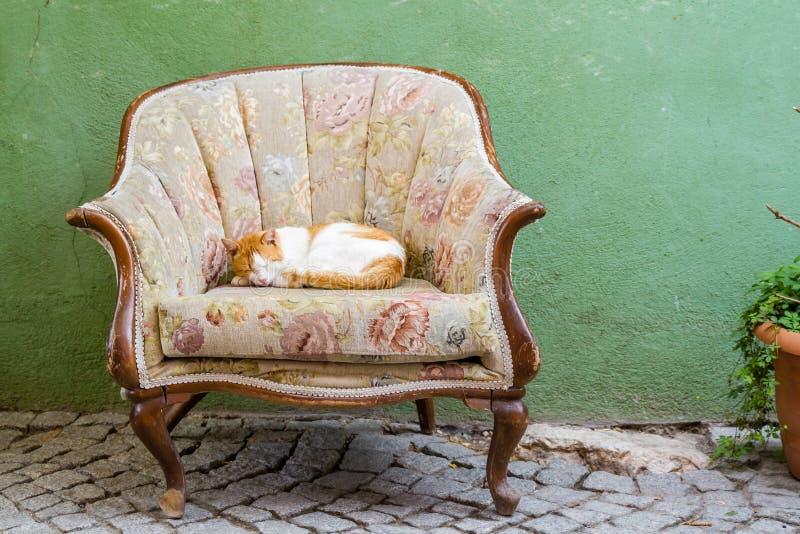 Ginger Cat Sleeping su Sofa Chair davanti ad una Camera fotografia stock libera da diritti