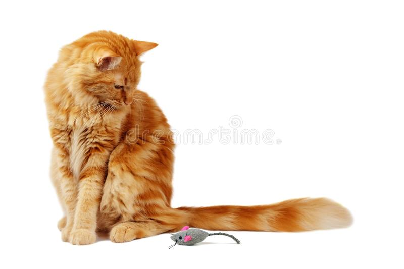Ginger cat staring at a toy mouse stock photos