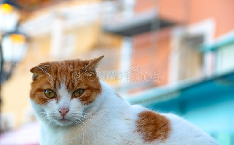 Ginger cat on a street of Positano, Italy royalty free stock photography