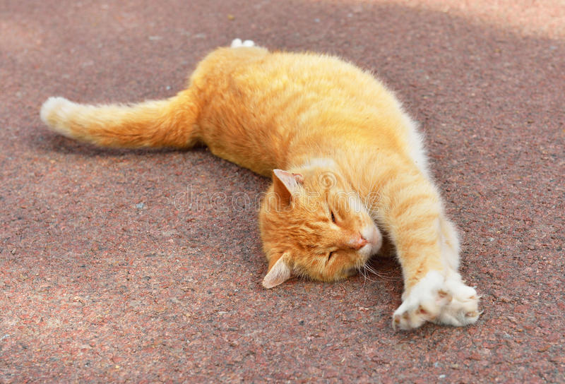 Ginger cat stretches stock image