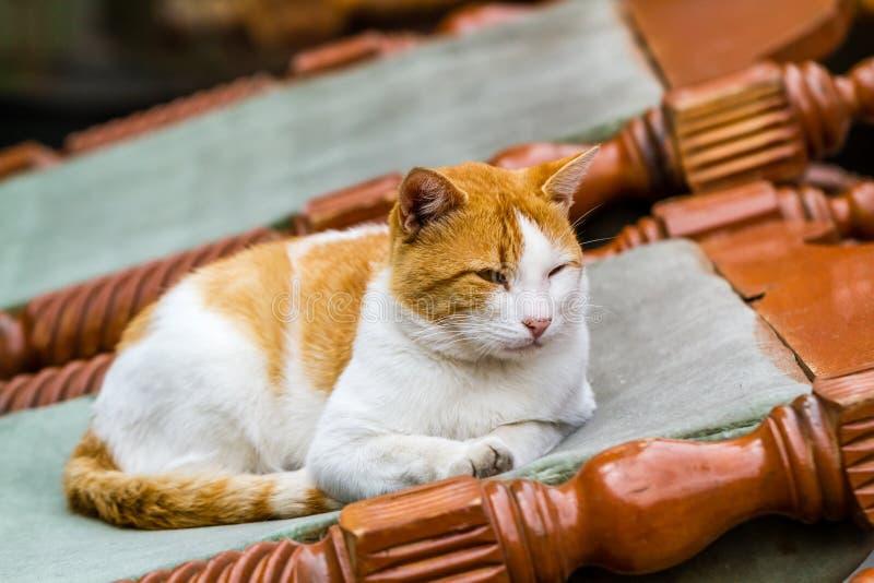 Ginger Cat su Sofa Chair davanti ad una Camera fotografie stock