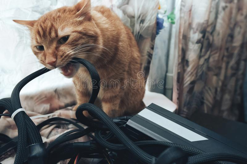 Ginger Cat Bite the Wires stock image. Image of card - 112733315