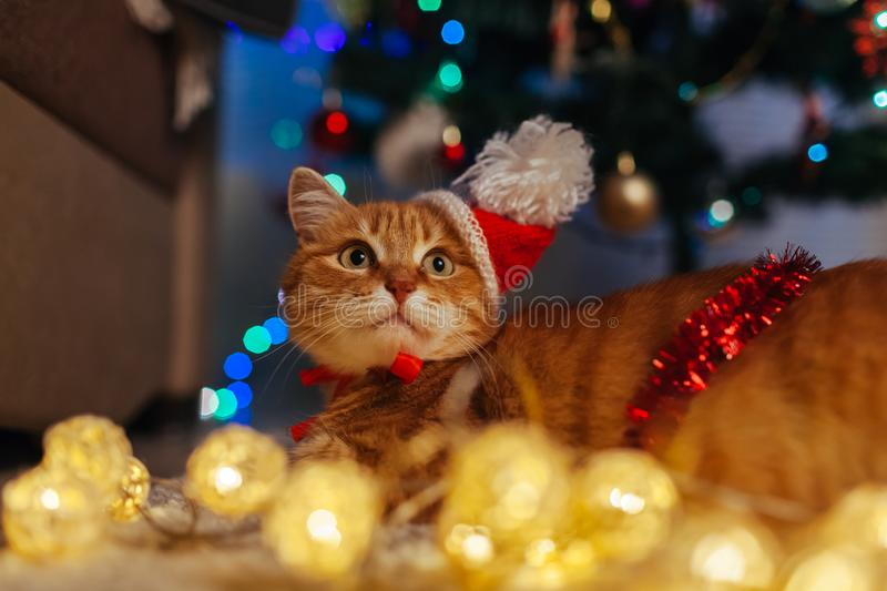 Ginger cat wears Santa`s hat under Christmas tree playing with lights. Christmas and New year concept royalty free stock images
