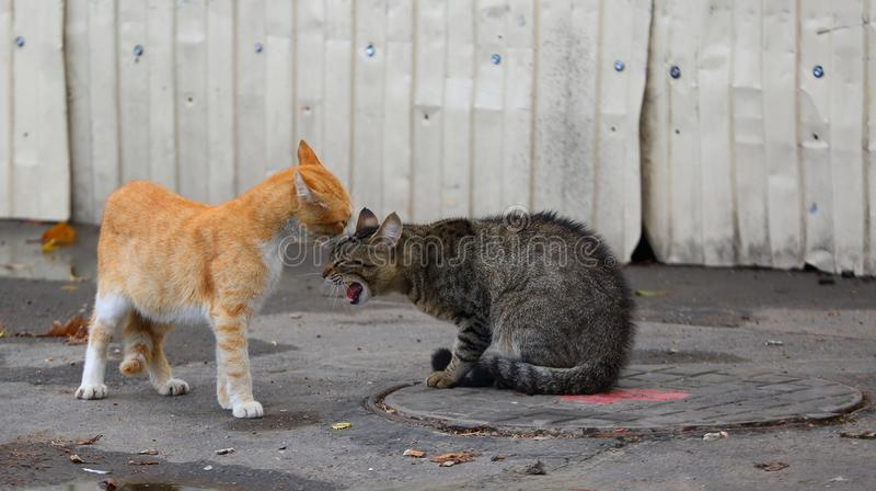 Ginger and grey cats on the street stock photography