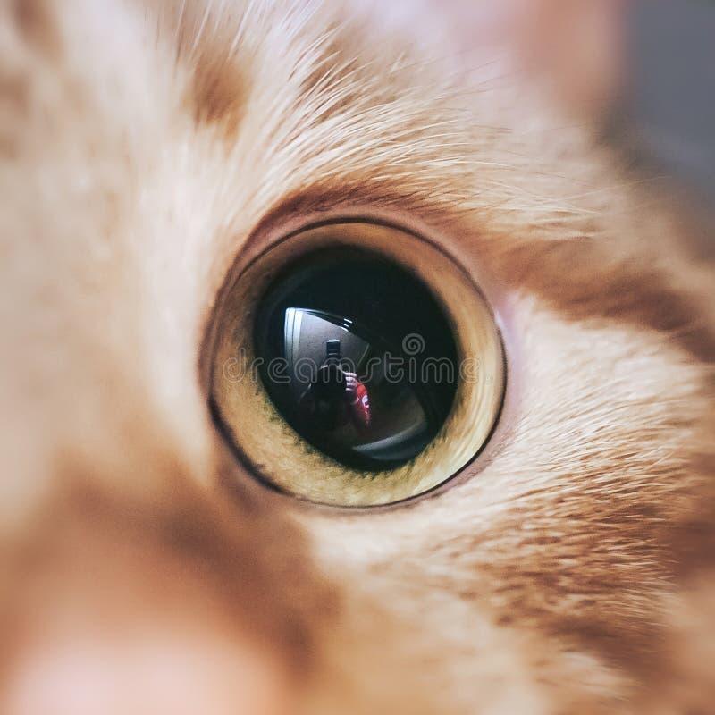 Ginger Hair Red Cat Muzzle Closeup royaltyfri fotografi