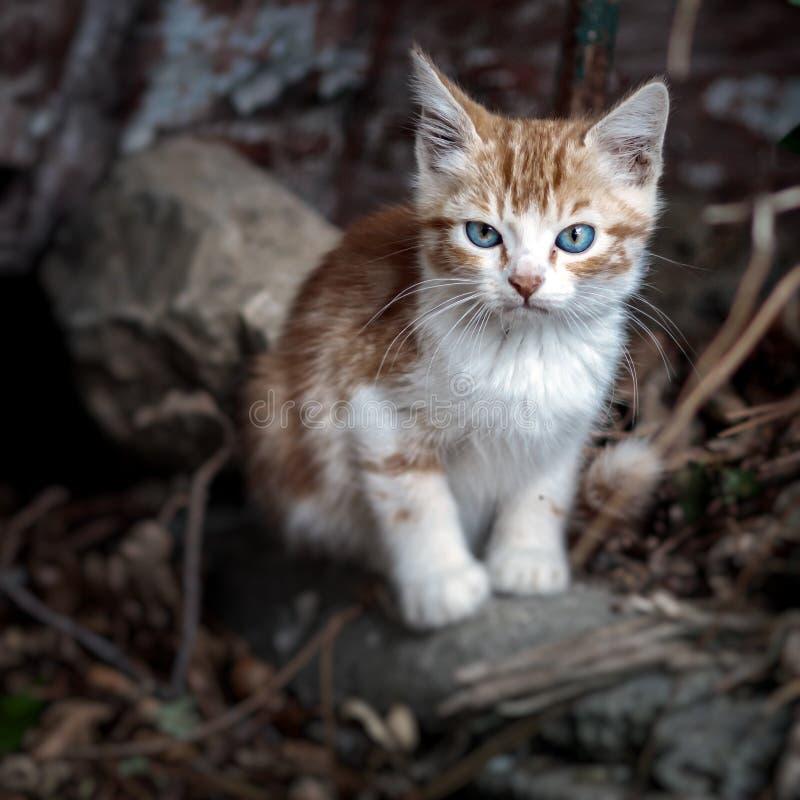 Ginger kitten immagini stock