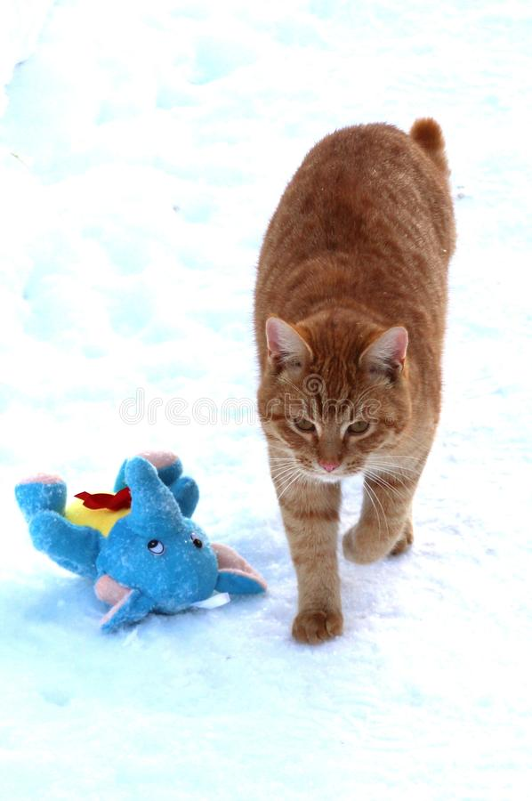 Ginger kitten played enough with a plush toy. Ginger cat is played in the snow. It can be used to illustrate cats, to create postcards, to design articles on a stock image