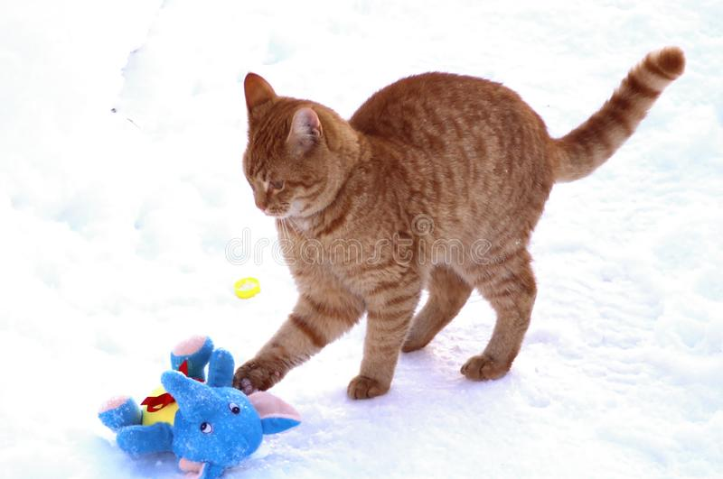 Ginger kitten is played with a plush toy. Ginger cat is played in the snow. It can be used to illustrate cats, to create postcards, to design articles on a royalty free stock image