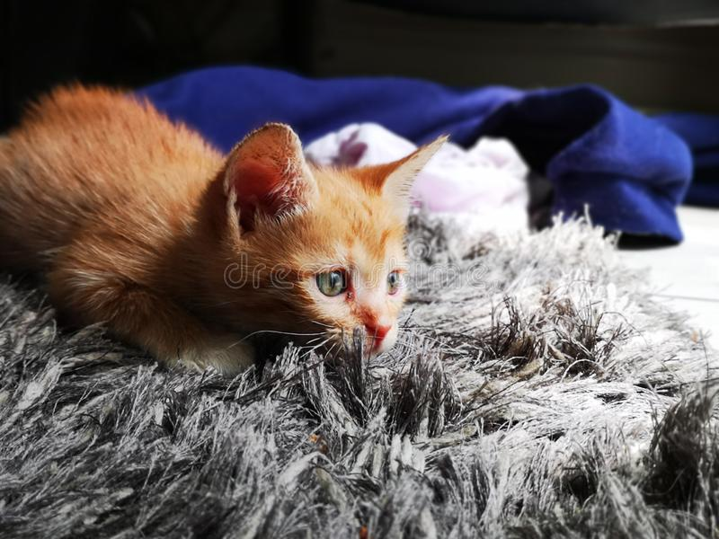 Ginger Kitten pronto para atacar fotos de stock royalty free