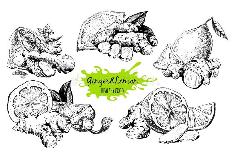 Ginger and lemon stock illustration