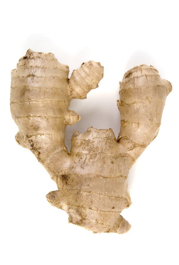 ginger odizolowane korzeń obrazy stock