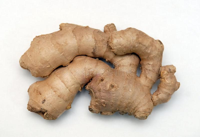 Ginger root royalty free stock photo