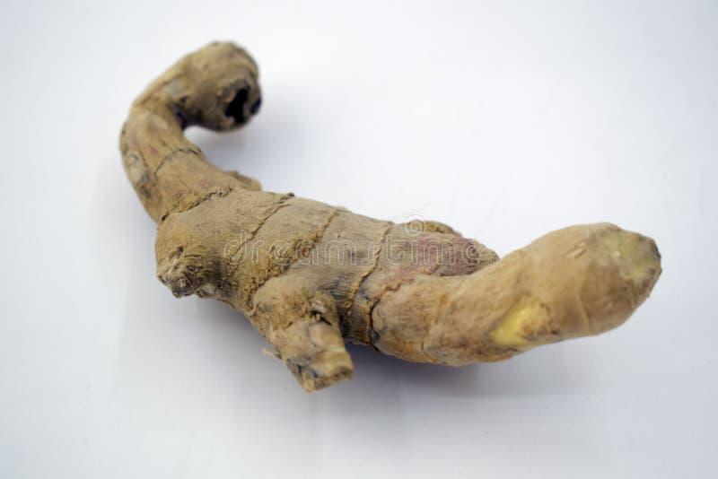 Ginger root / studio shot of fresh and raw Zingiber on white background, stock image