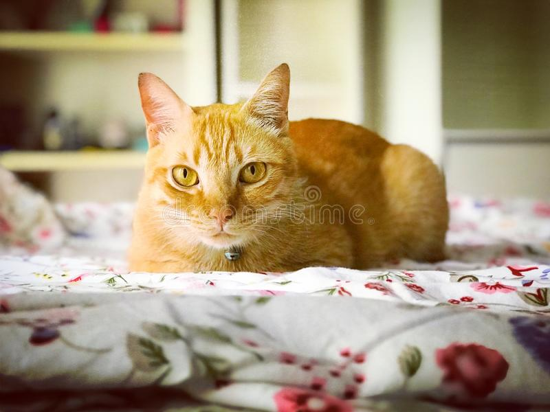 Ginger tabby cat stock photo
