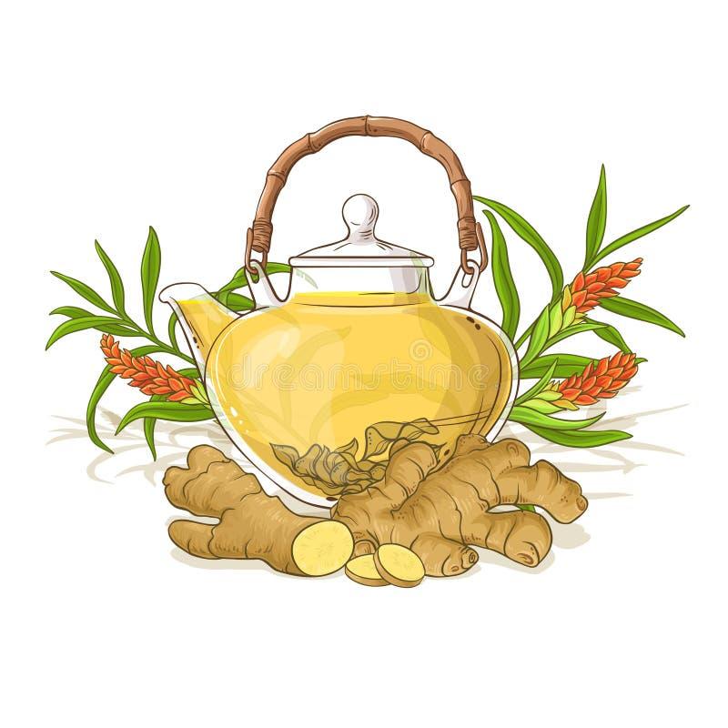 Ginger tea illustration. Ginger tea in teapot illustration on white background vector illustration