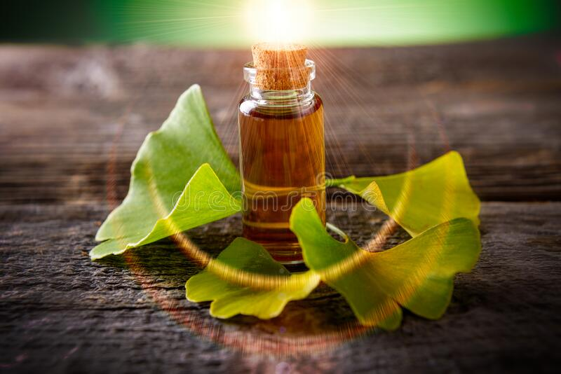 Gingko biloba. Essential oil and fresh leaves on wooden board stock photography