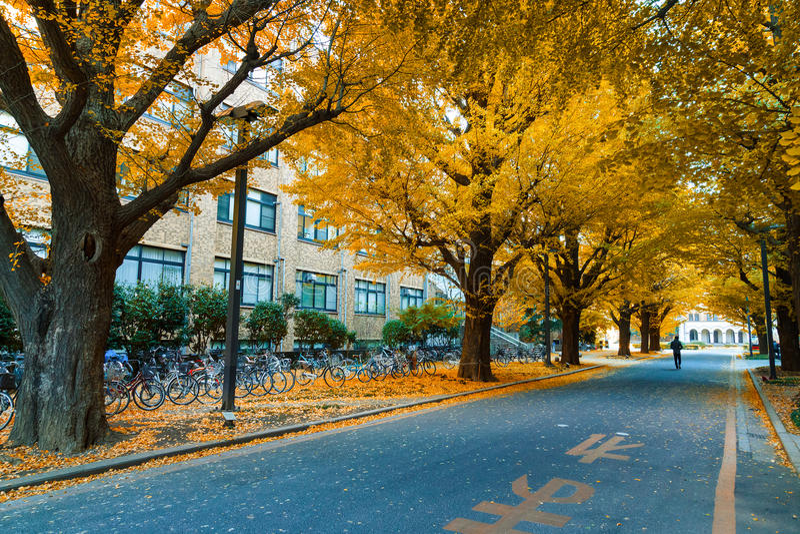 Ginkgo-Baum an Tokyo-Universität im Herbst lizenzfreies stockfoto