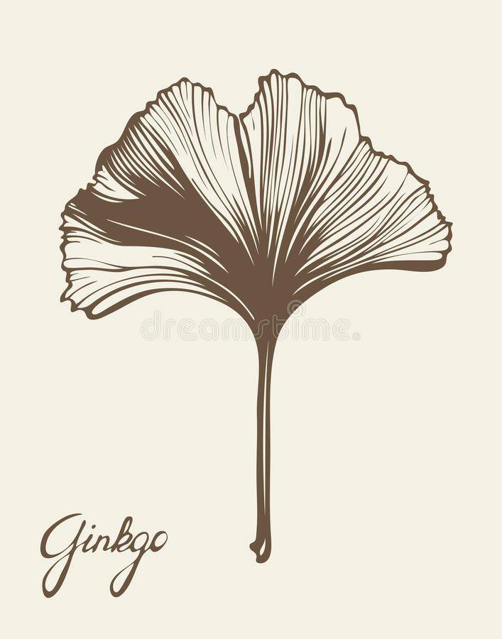 Ginkgo Biloba stock illustrationer