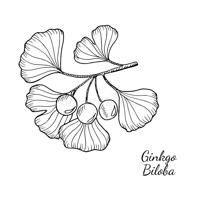 Acheter Ginkgo Biloba - L'attention et la concentration
