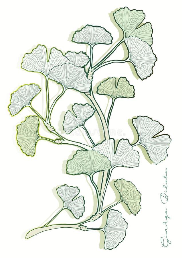 Ginkgo biloba Blätter vektor abbildung