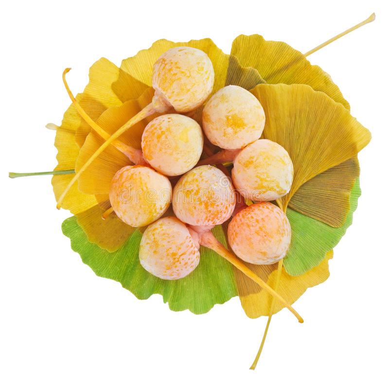 Download Ginkgo Biloba Fruits Heap Over Its Leaves Stock Photo - Image of cure, nature: 22188020