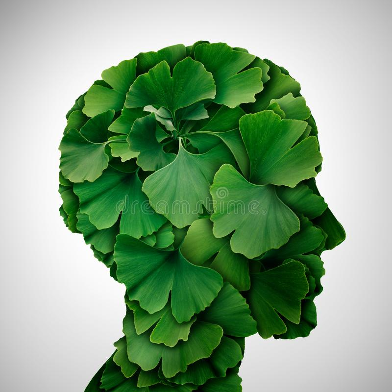 Ginkgo Biloba leaf Head. As a herbal medicine concept and natural phytotherapy medication symbol for healing as leaves shaped as a human royalty free stock images