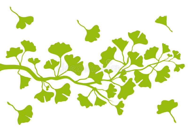 Ginkgo branch with leaves, vector. Ginkgo tree branch with green leaves, vector background