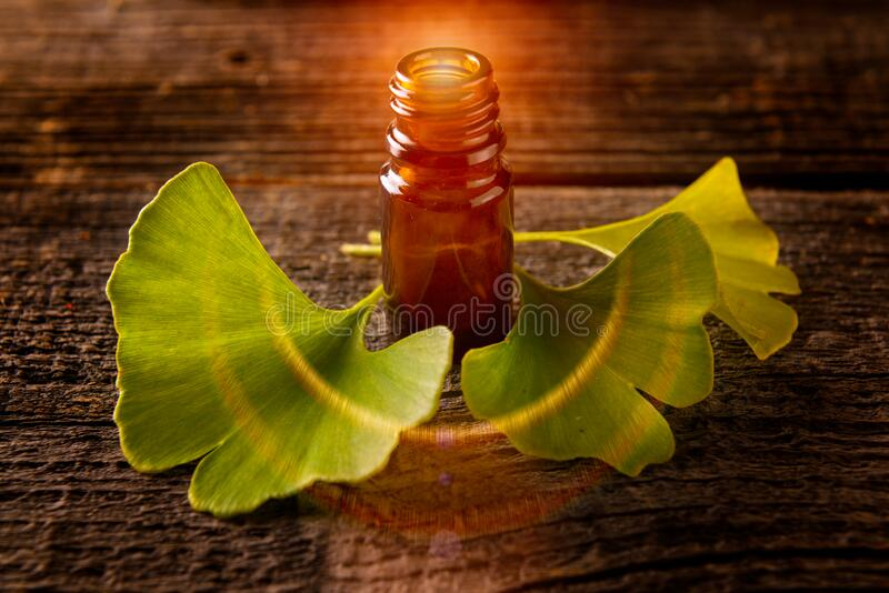 Gonkgo leaves and extract. Ginkgo essential extract in a bottle and fresh leaves stock images