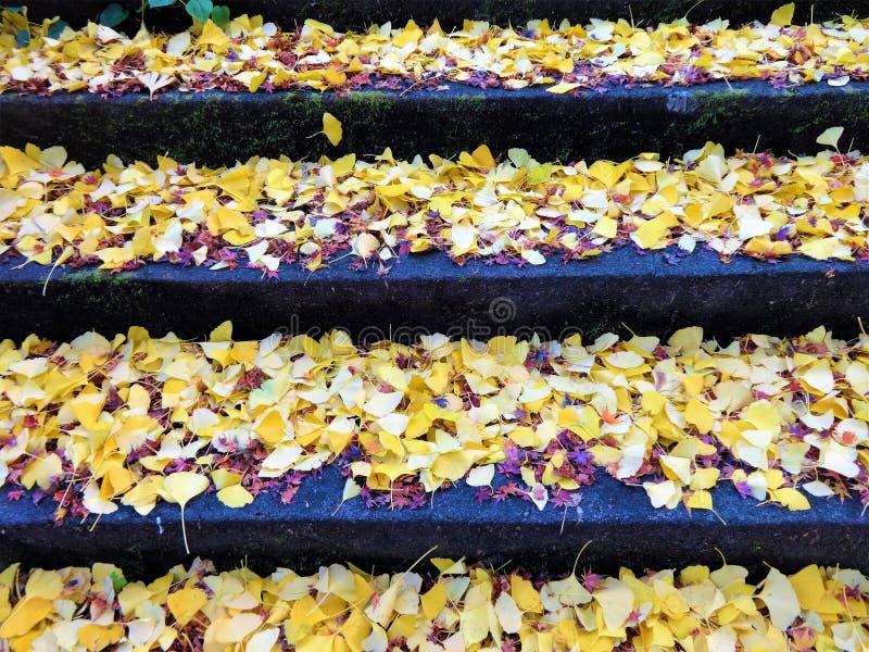 Ginkgo liście na kamiennych krokach zdjęcia stock