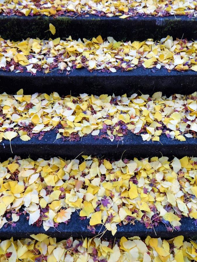 Ginkgo liście na kamiennych krokach zdjęcie royalty free