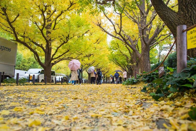 Ginkgogataavenyn i Meiji Jingu Gaien Park royaltyfria foton