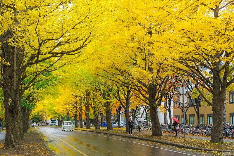 Ginkgoweg bij de Universiteit van Hokkaido, Japan royalty-vrije stock afbeeldingen