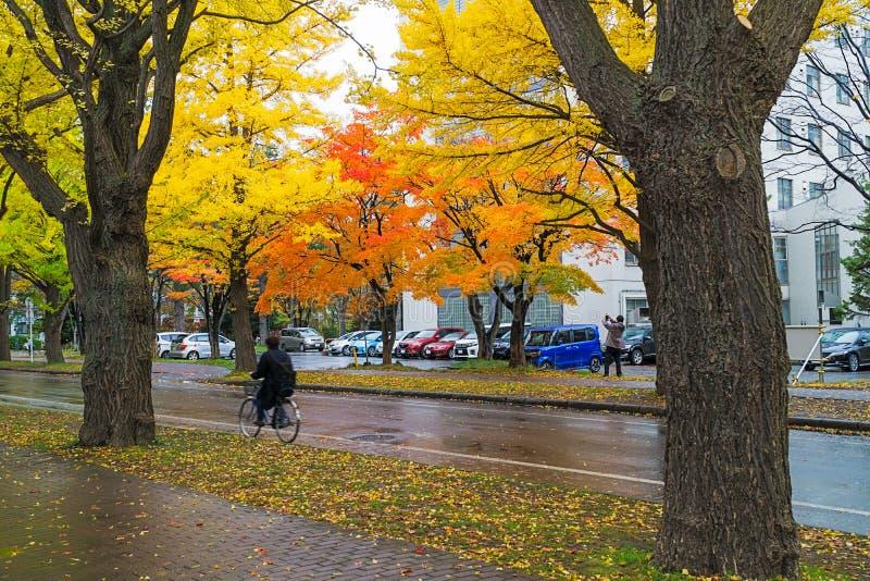 Ginkgoweg bij de Universiteit van Hokkaido, Japan royalty-vrije stock foto