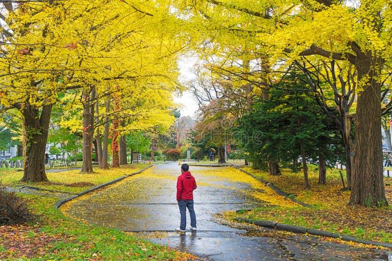 Ginkgoweg bij de Universiteit van Hokkaido, Japan royalty-vrije stock fotografie