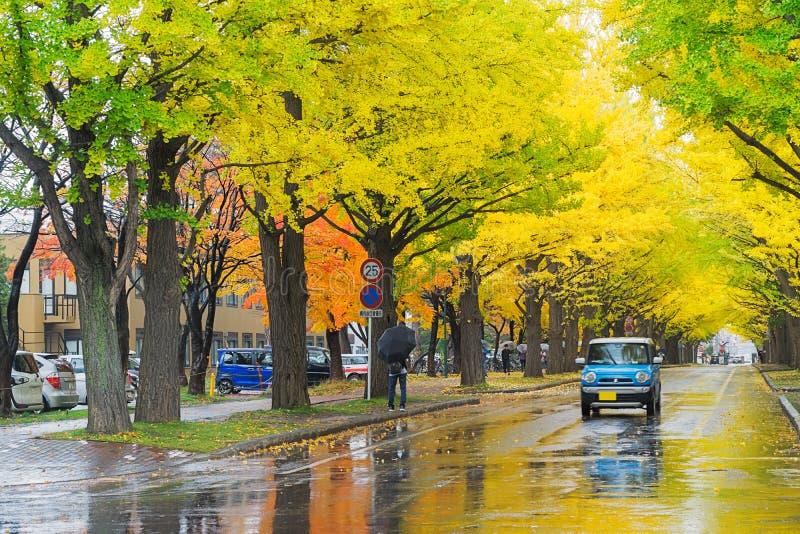 Ginkgoweg bij de Universiteit van Hokkaido, Japan royalty-vrije stock afbeelding