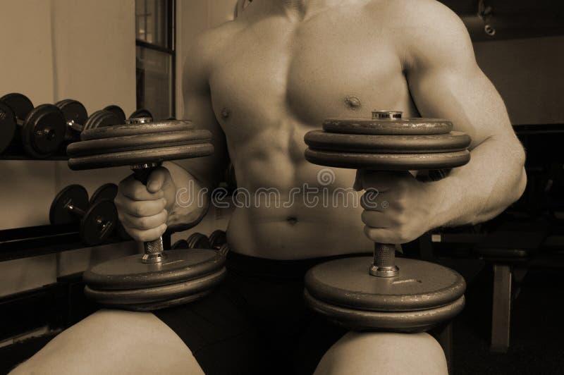Download In ginnastica fotografia stock. Immagine di tipo, sexy - 450382