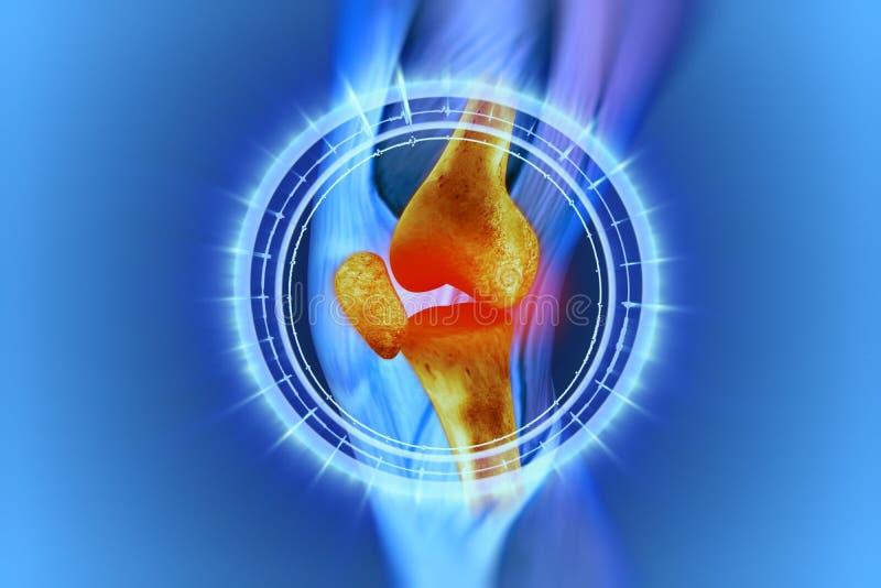 Ginocchio, anatomia, ossa immagine stock libera da diritti