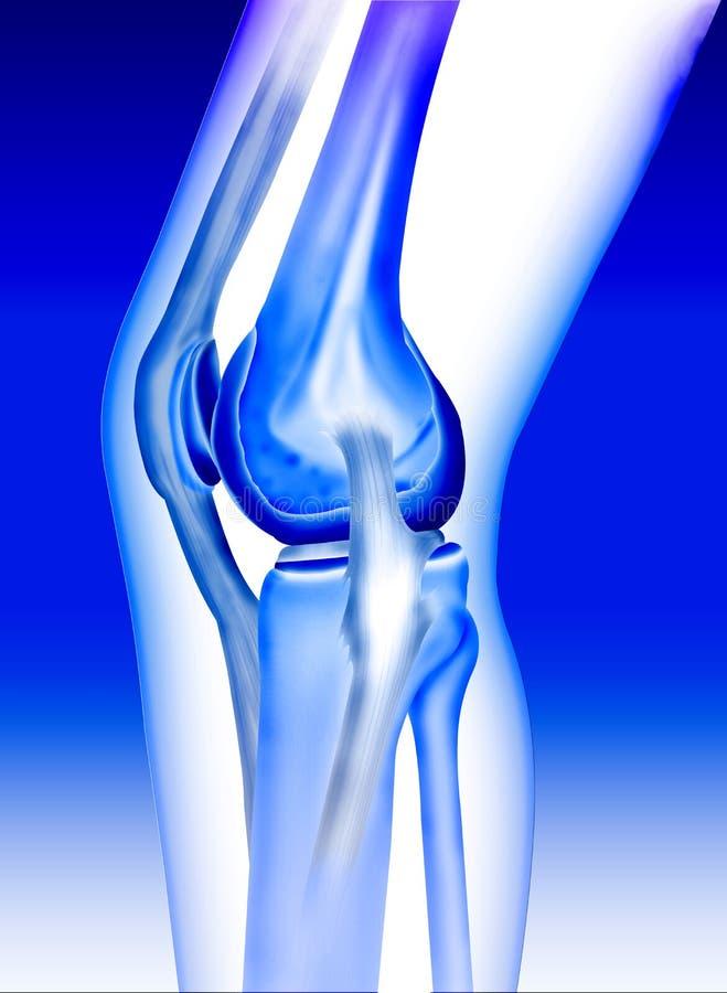 Ginocchio dell'osso illustrazione di stock