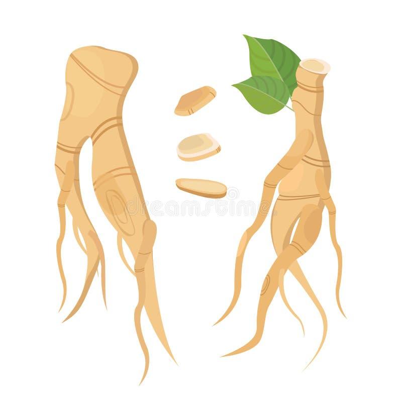 Ginsém da raiz e das folhas Os aditivos biológicos são Estilo de vida saudável Ilustração lisa do vetor de plantas medicinais ilustração royalty free