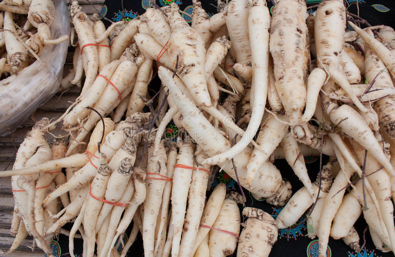 Download Ginseng stock photo. Image of homeopathic, east, culture - 26543412