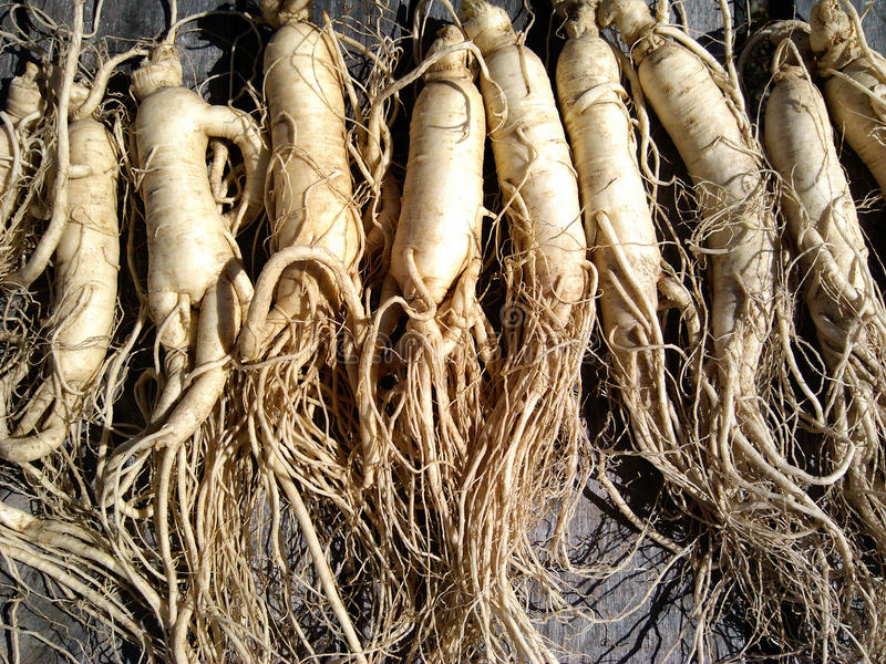 Ginseng photographie stock