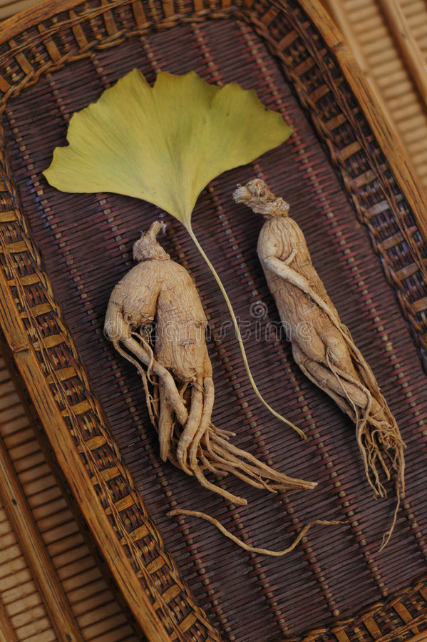 Ginseng and Ginkgo. Ginseng, the energy root with Ginkgo leaf. Shallow depth of focus-focus on the left root stock image