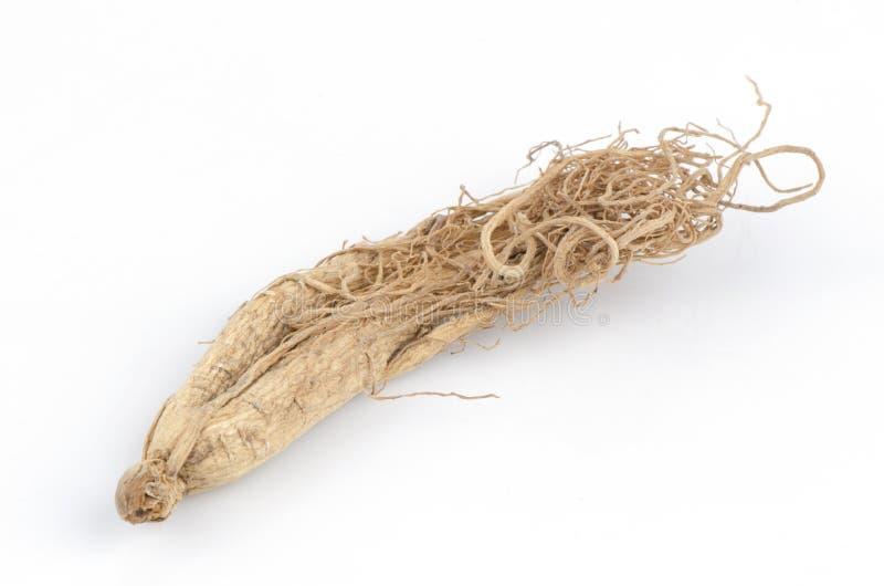 Ginseng (Panax ginseng C.A. Mayer). zdjęcia stock