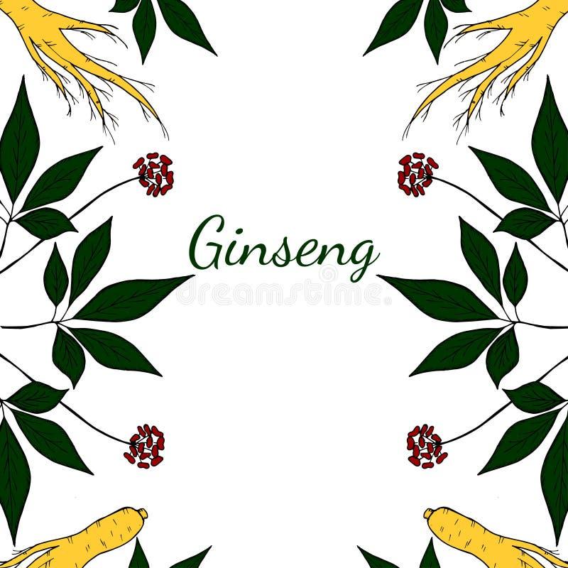 Ginseng vertikal bakgrund i färg royaltyfri illustrationer