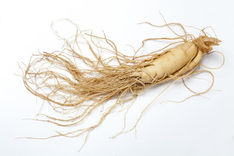 ginsengen wortel   royalty-vrije stock foto's