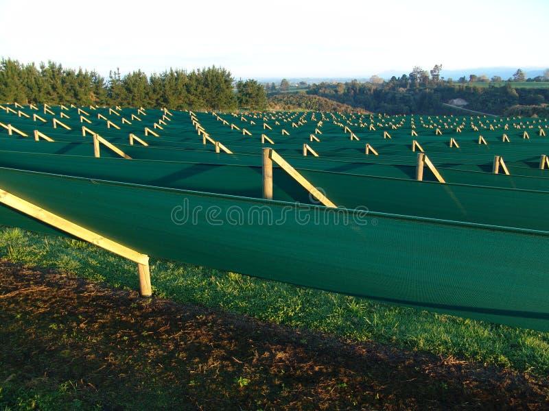 Ginsenglandbouwbedrijf met beschermende schaduw stock foto