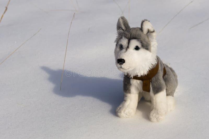 Giocattolo lanuginoso del husky sulla neve immagine stock libera da diritti