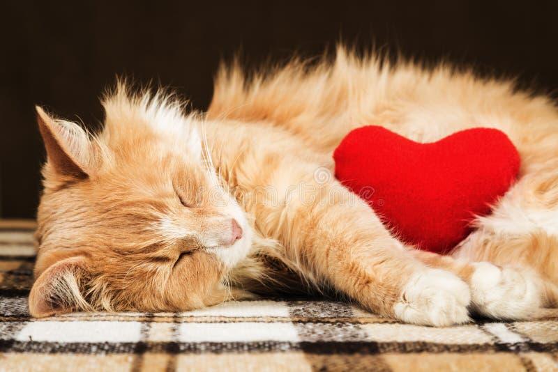Giocattolo molle abbracciante addormentato del cuore della peluche del gatto lanuginoso sveglio rosso fotografia stock libera da diritti